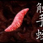 [RJ198208] 触手蛭 のDL情報
