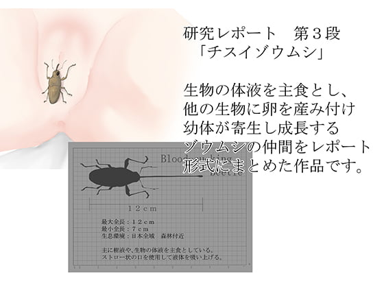 [RJ263689][てるてるがーる] 研究レポート チスイゾウムシ編